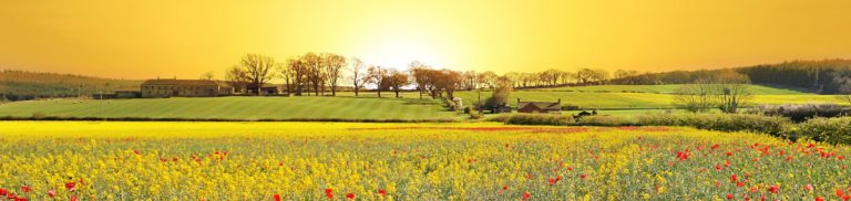 Sun on green meadow