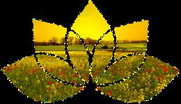 Lotus flower shape with sunrise over wild flower meadow & fields